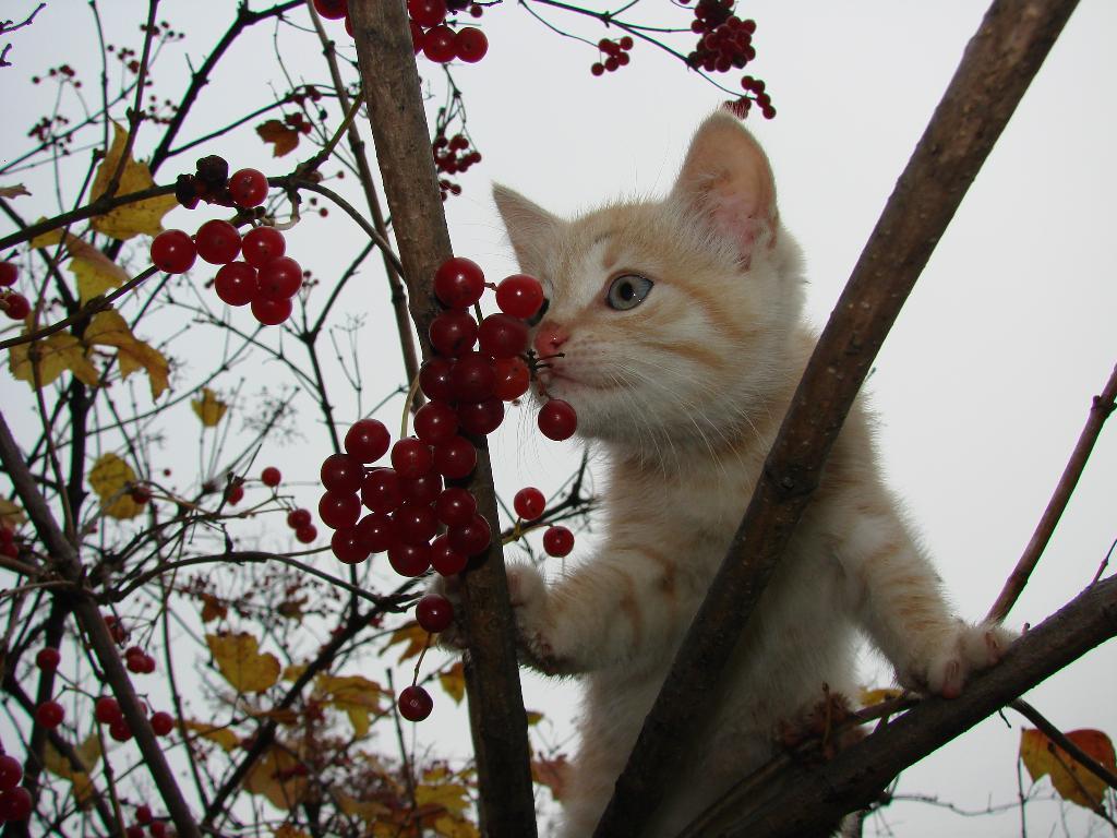 Любопытный Микроб. Лучше кошки зверя нет!