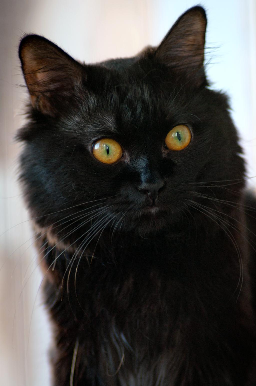 Портрет котэ. Лучше кошки зверя нет!