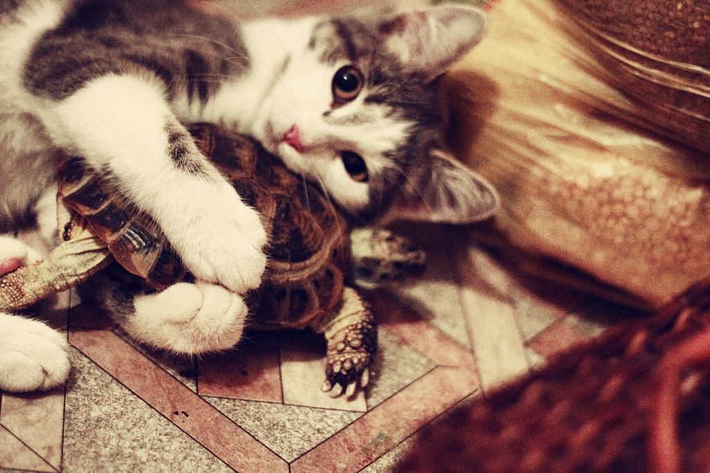 Обнимашки. Лучше кошки зверя нет!