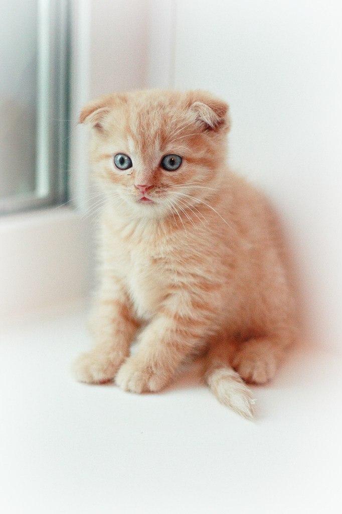 Тигруля. Лучше кошки зверя нет!
