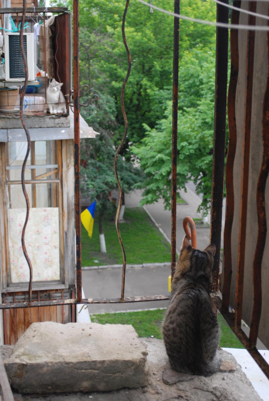 Грыня) Мы на разных берегах... балконах). Лучше кошки зверя нет!