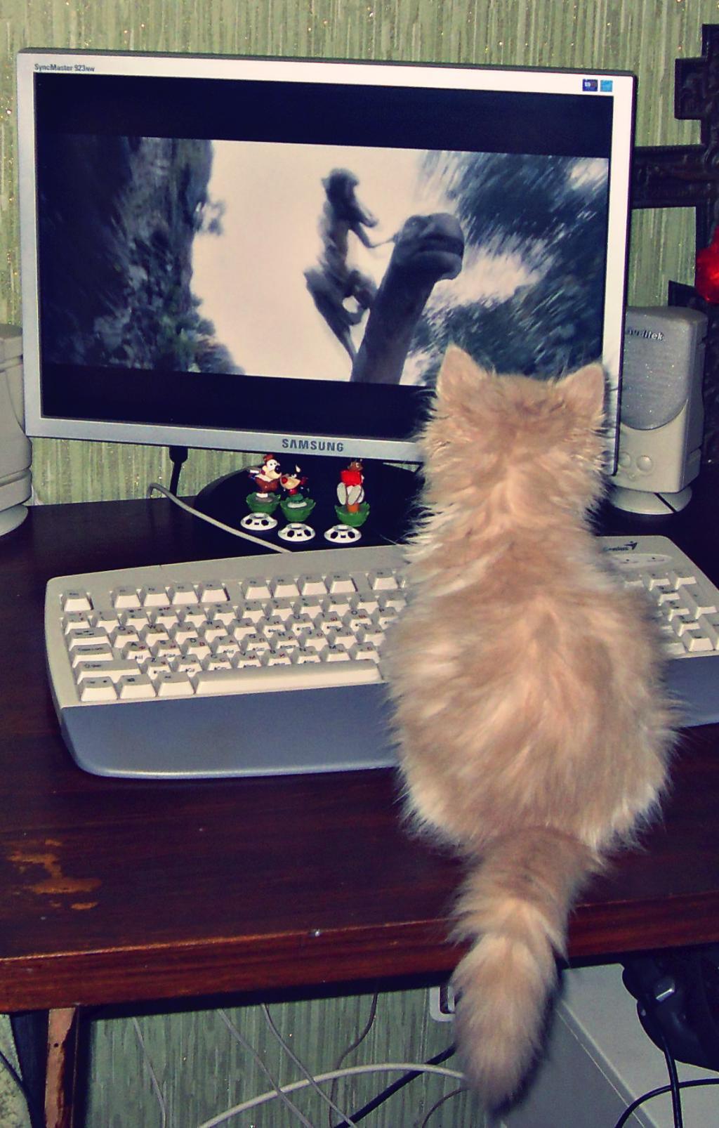 Вы не представляете как интересно. Лучше кошки зверя нет!