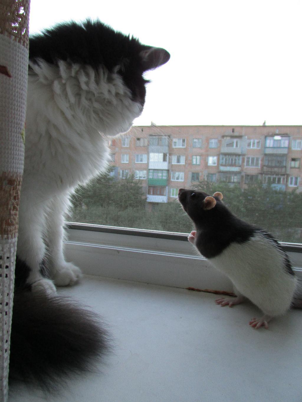 НУ можно на улицу? Ну пожаааалуйста.... Лучше кошки зверя нет!