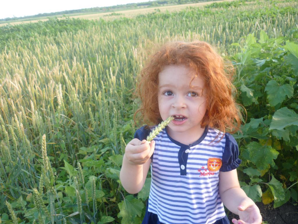Пшеничное поле. Дары лета
