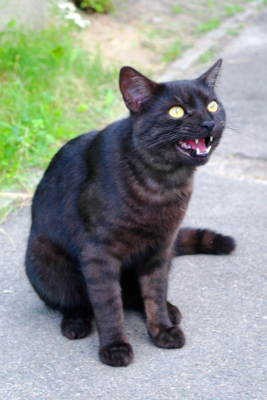 Наш Мурзик. Лучше кошки зверя нет!