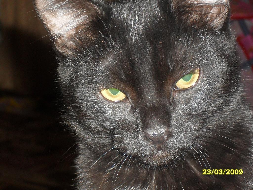 Сеанс гипноза. Лучше кошки зверя нет!