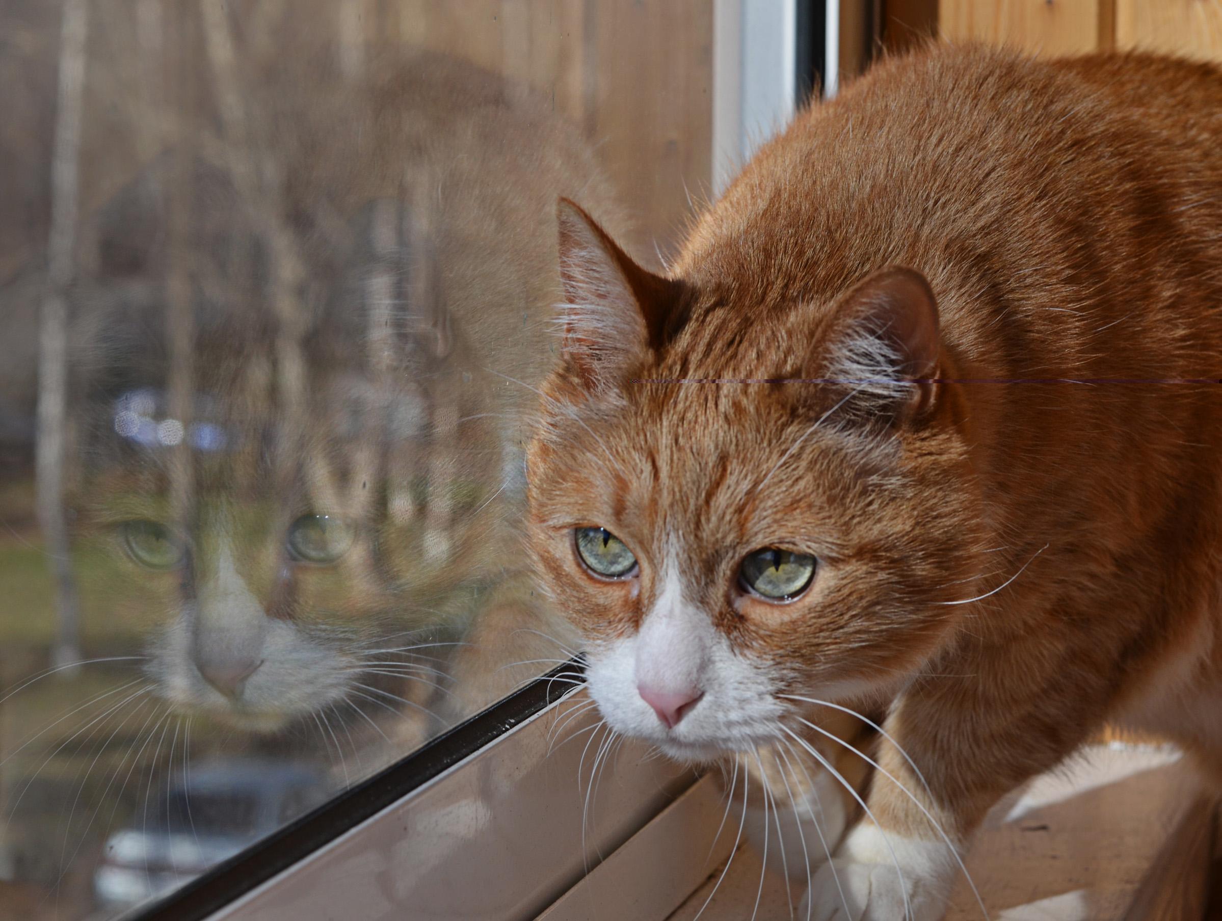 Ох уж этот Кузя-ОХОТНИЧЕК..... Лучше кошки зверя нет!