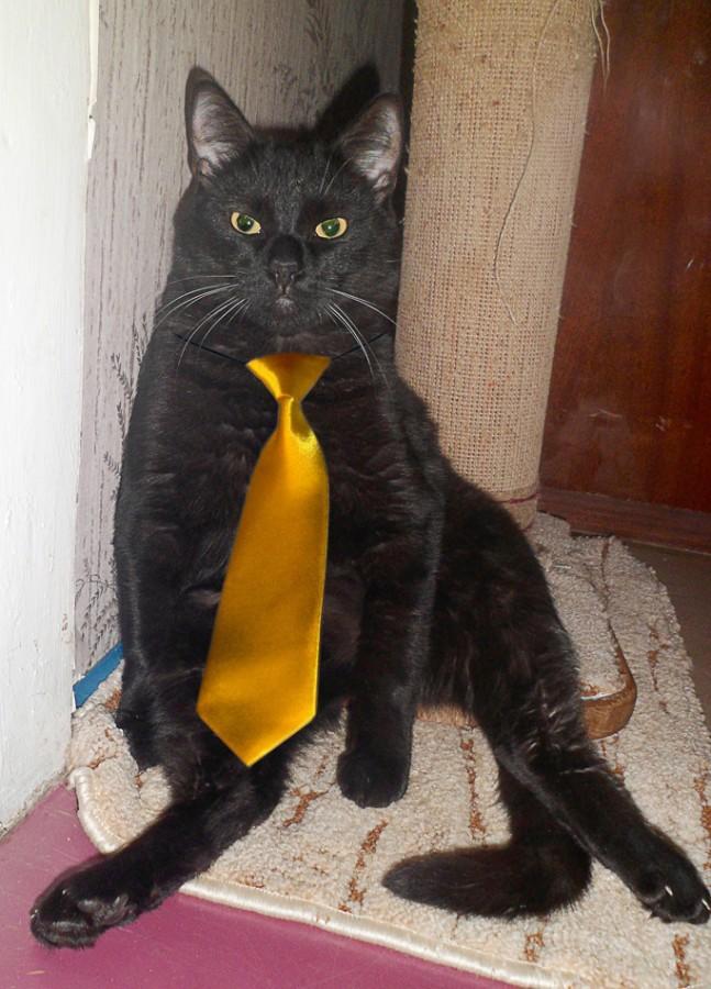 Кот Фиделевич знает толк  в стиле . Лучше кошки зверя нет!