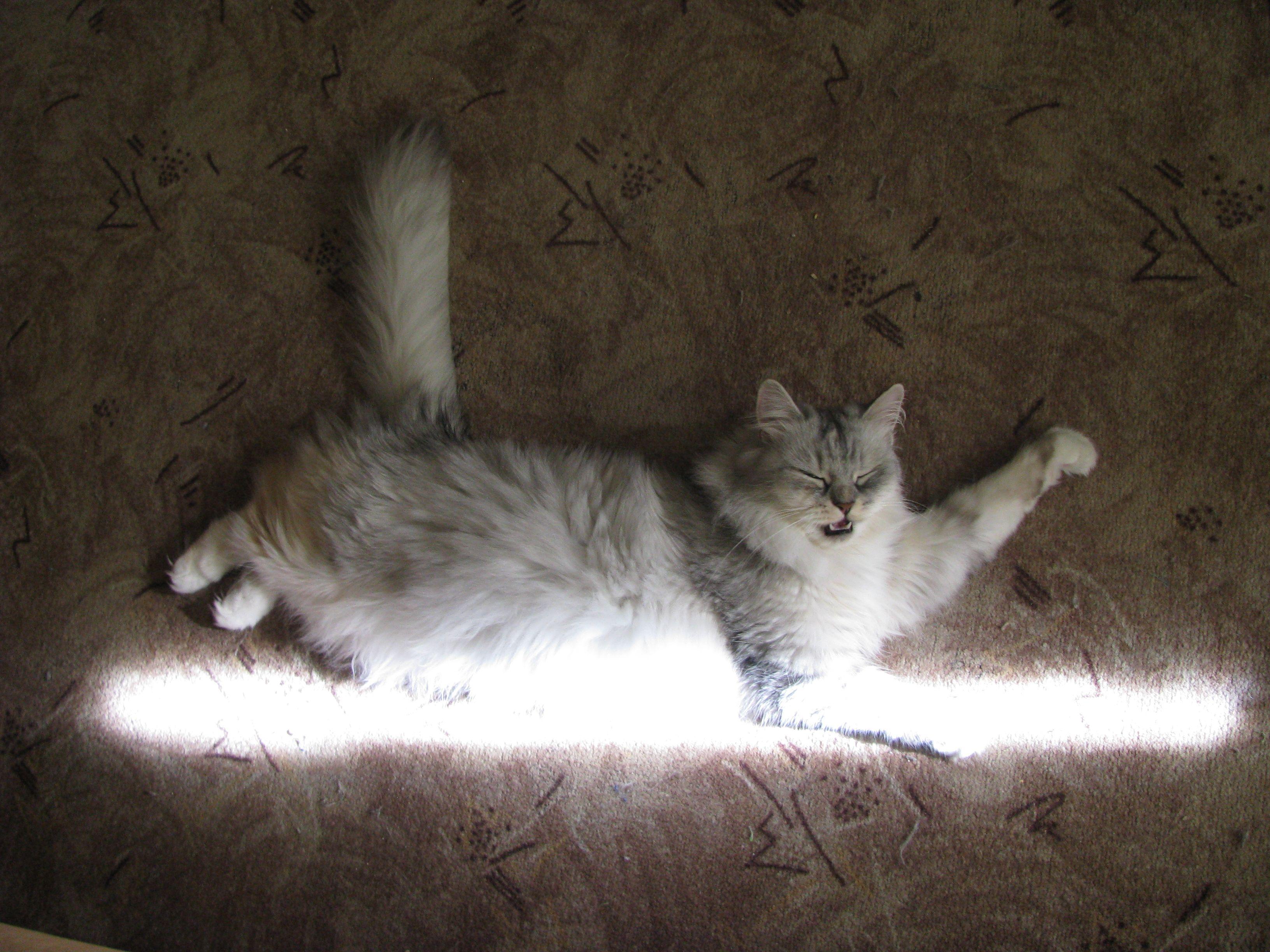 Полёт на солнечном луче.. Лучше кошки зверя нет!
