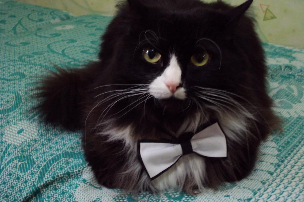 Позвольте представиться,сэр ТОМАС!. Лучше кошки зверя нет!