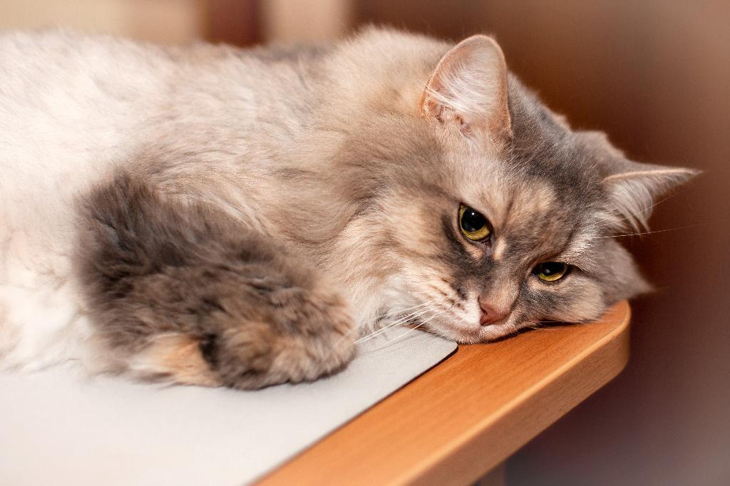 Задумалась.... Лучше кошки зверя нет!