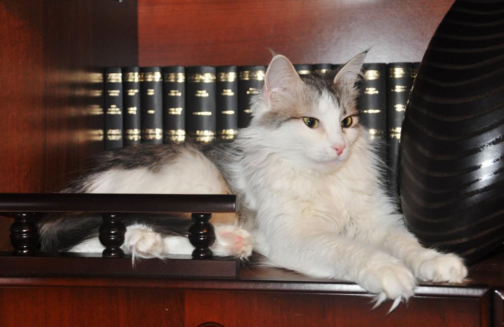 Королева Виктория. Лучше кошки зверя нет!