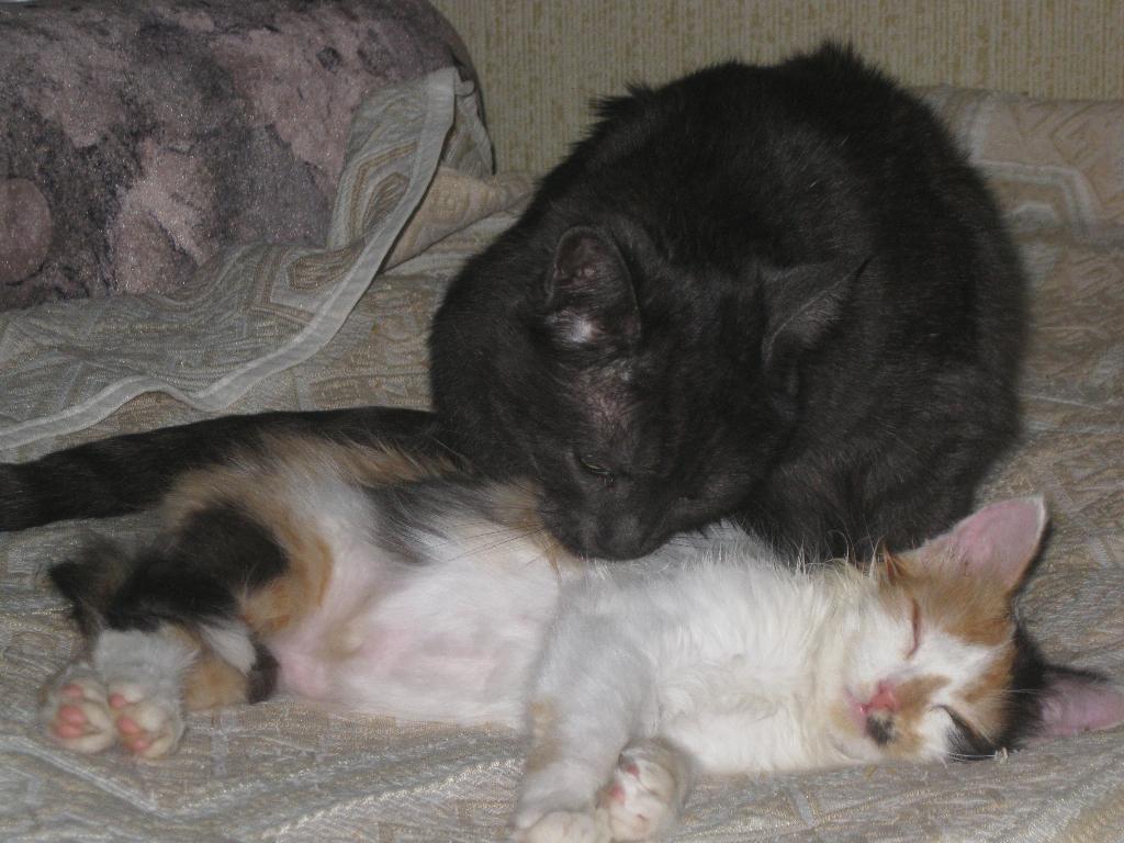 Добрая Дымка пригрела очередную сироту. Лучше кошки зверя нет!