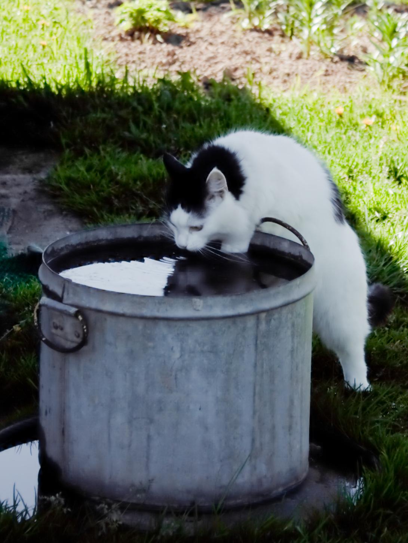 А чего мелочиться-то.... Лучше кошки зверя нет!
