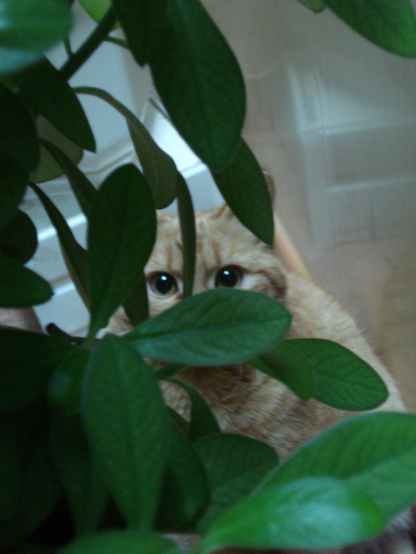 Главное: хорошо замаскироваться!. Лучше кошки зверя нет!