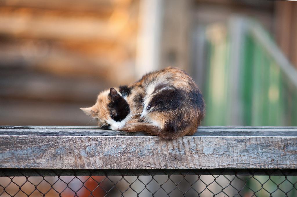 кошка спит - она устала. Лучше кошки зверя нет!