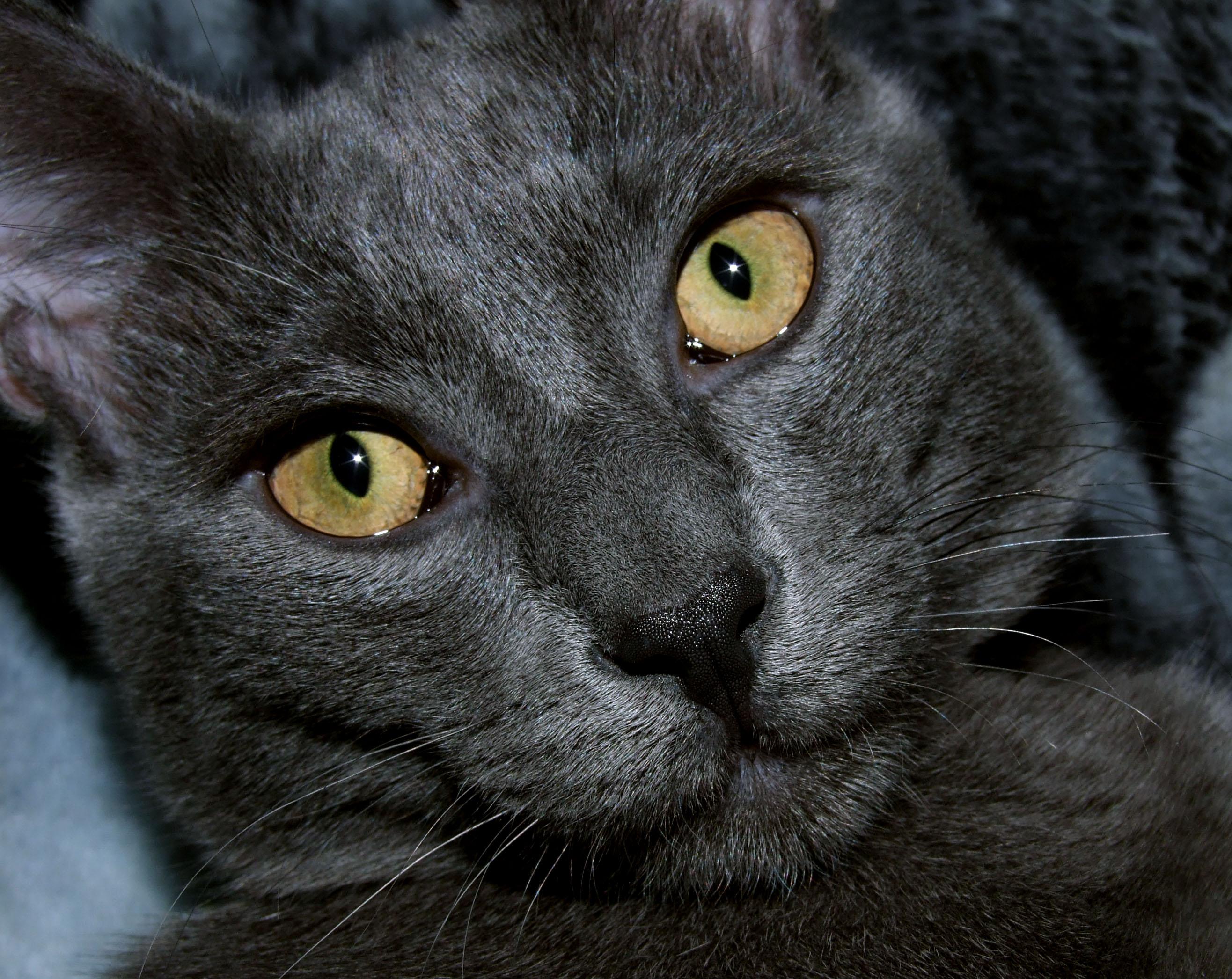 Мой кот Тимофей.