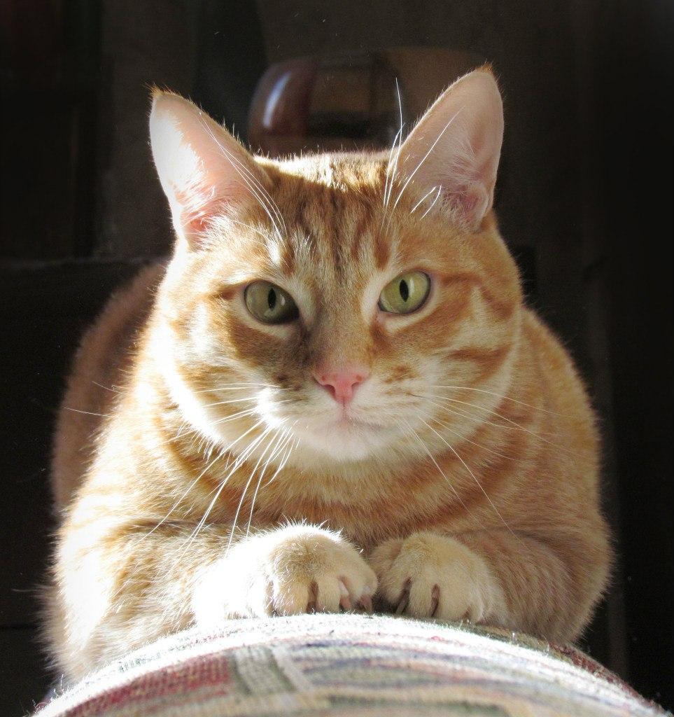 Господин с другой планеты. Лучше кошки зверя нет!