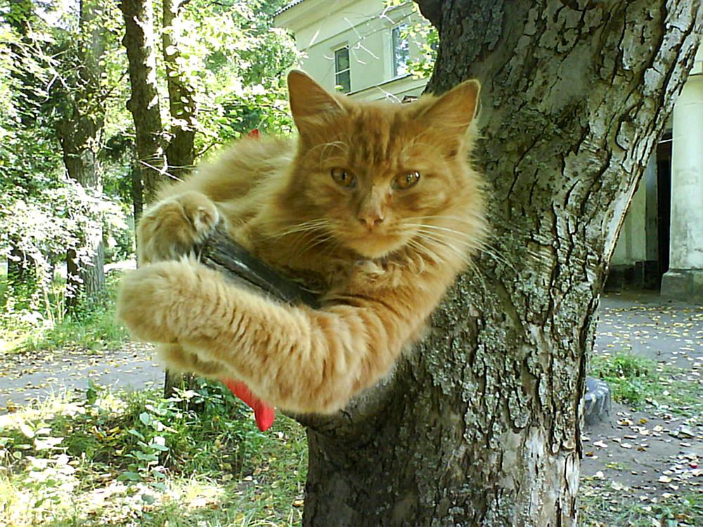 Рыжик. Лучше кошки зверя нет!