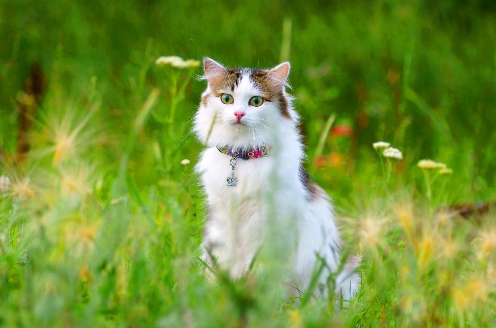 Белая и пушистая.... Лучше кошки зверя нет!