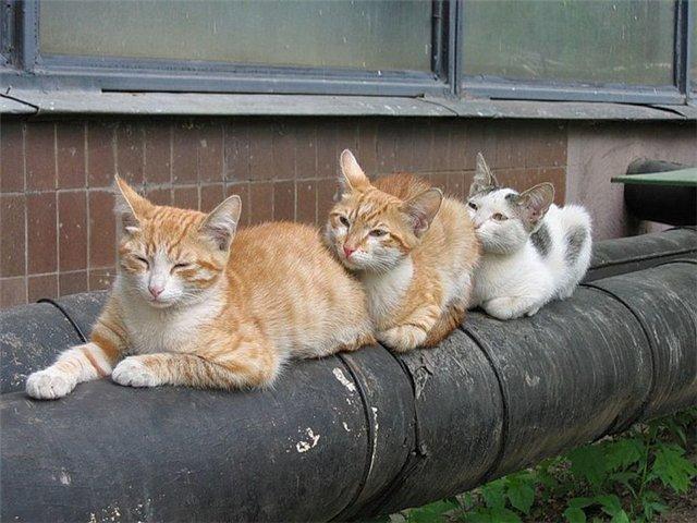 МОИ НЕРАЗЛУЧНЫЕ  ЛЮБАВЫ!!!!!. Лучше кошки зверя нет!