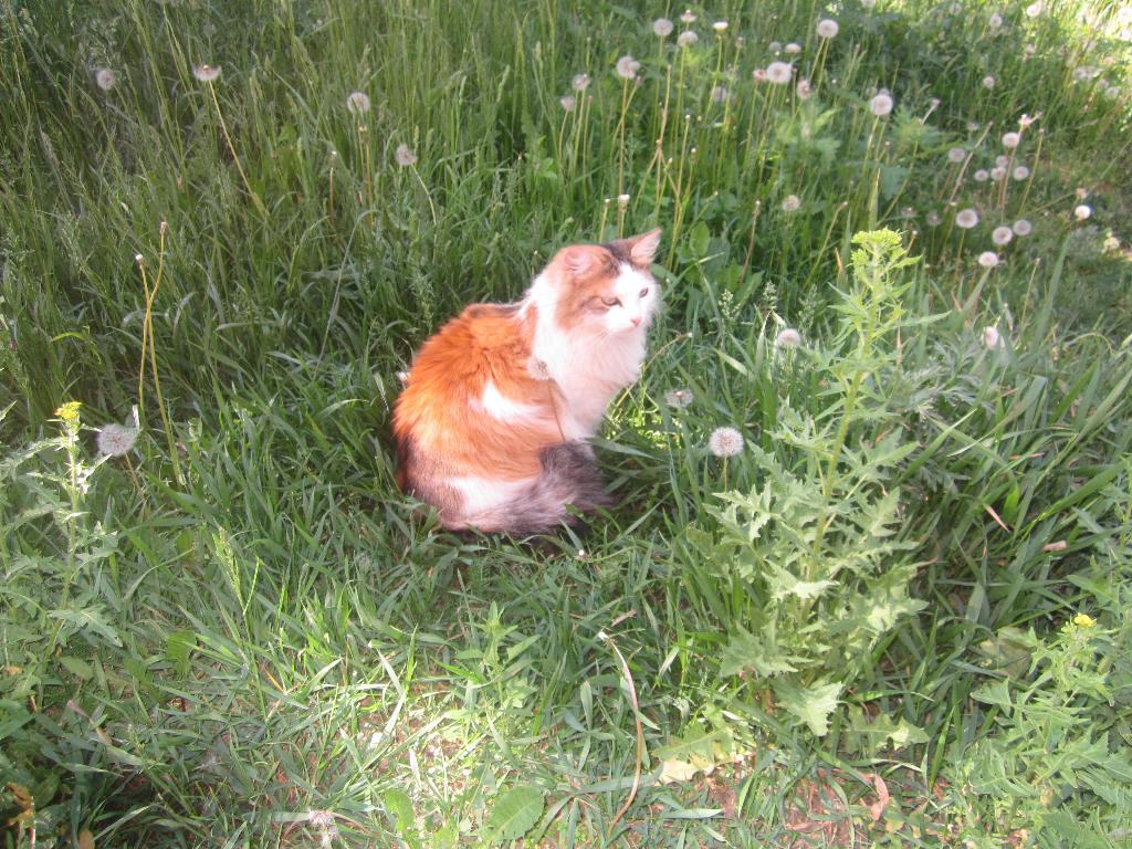 мое солнышко-Мусяша. Лучше кошки зверя нет!
