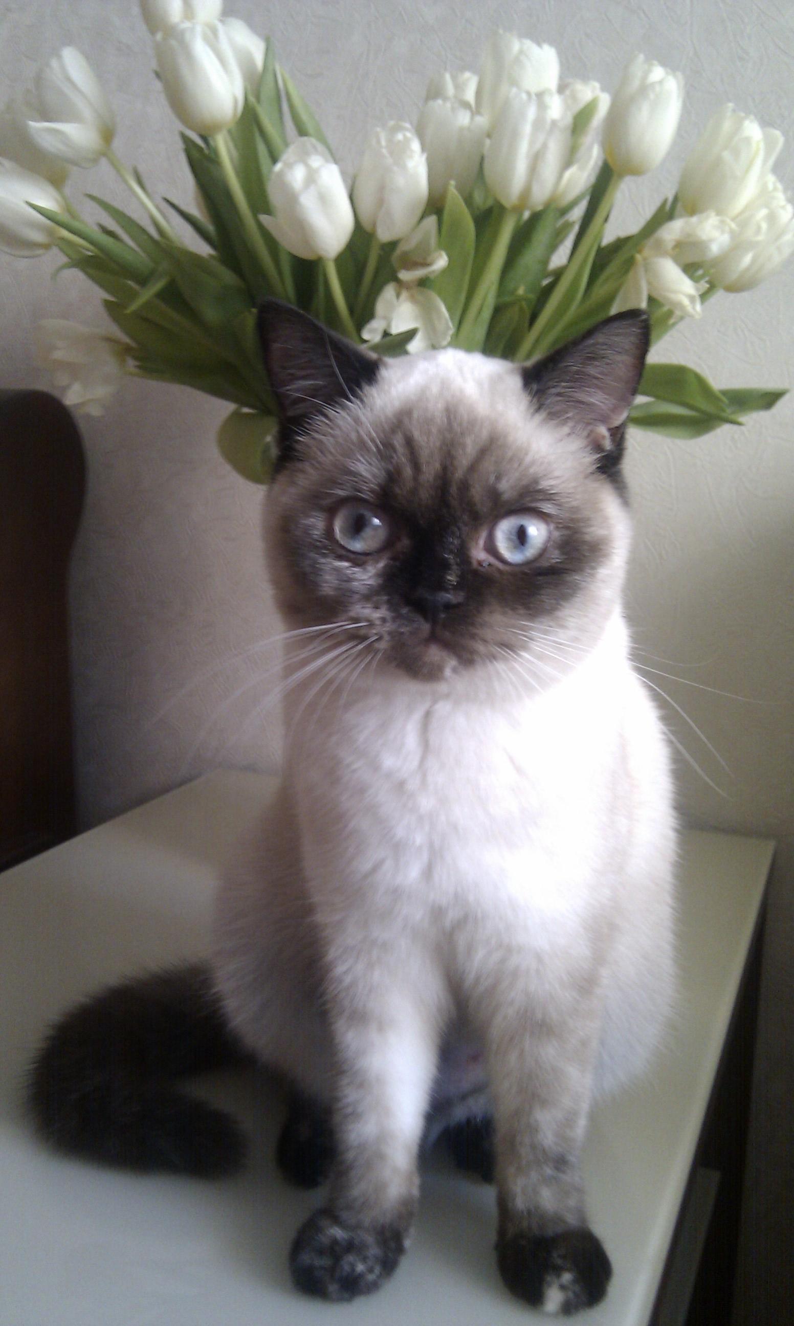 8-Мяуртовская красотка. Лучше кошки зверя нет!
