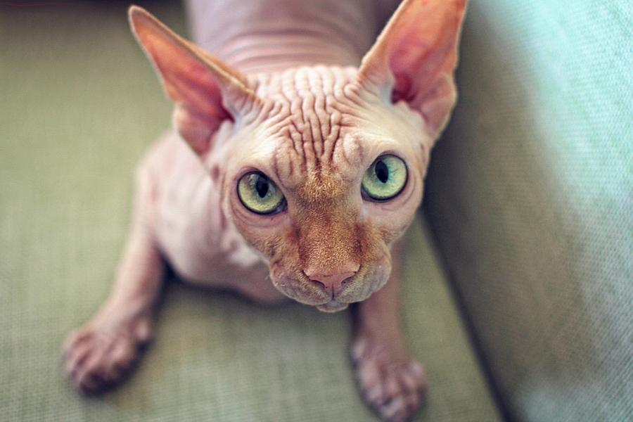 Глазастое чудо =). Лучше кошки зверя нет!