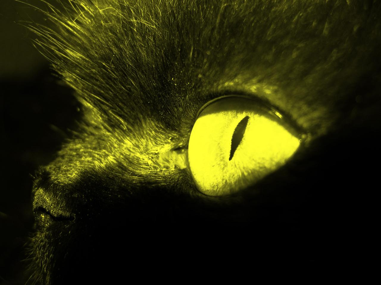 глаз дракона. Лучше кошки зверя нет!
