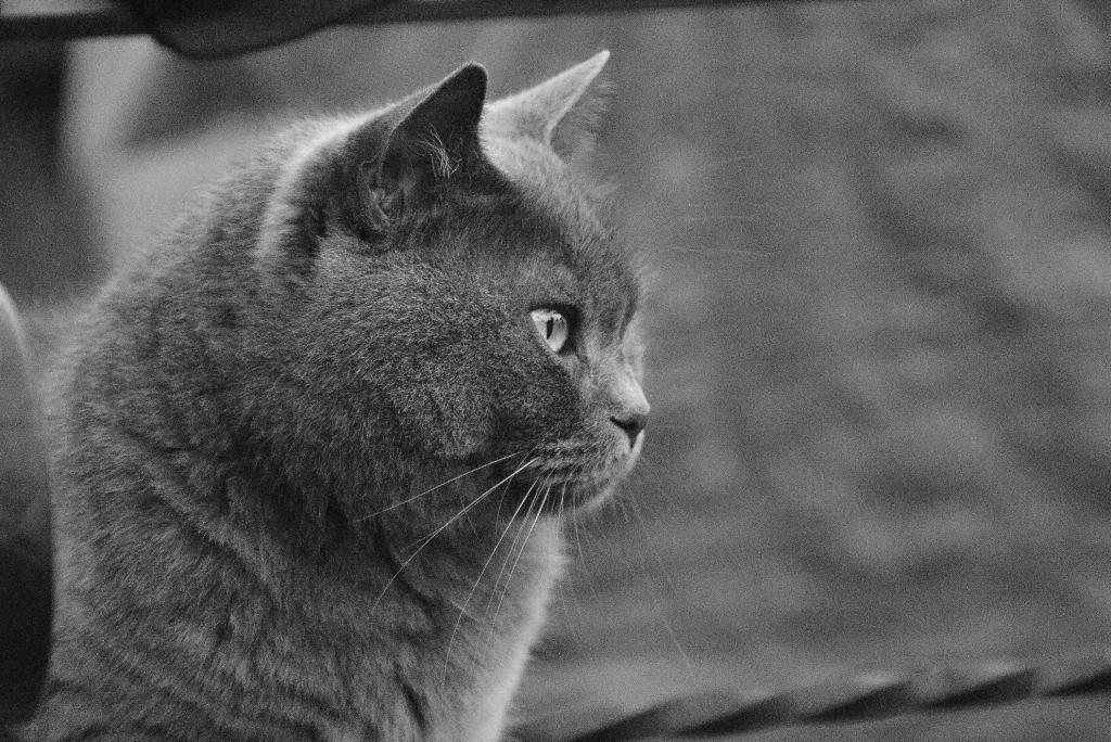 Масянтус обыкновенная.. Лучше кошки зверя нет!