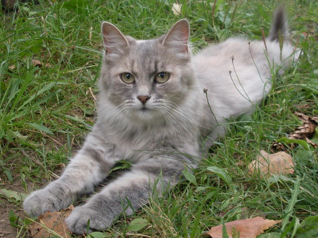 Киса. Лучше кошки зверя нет!