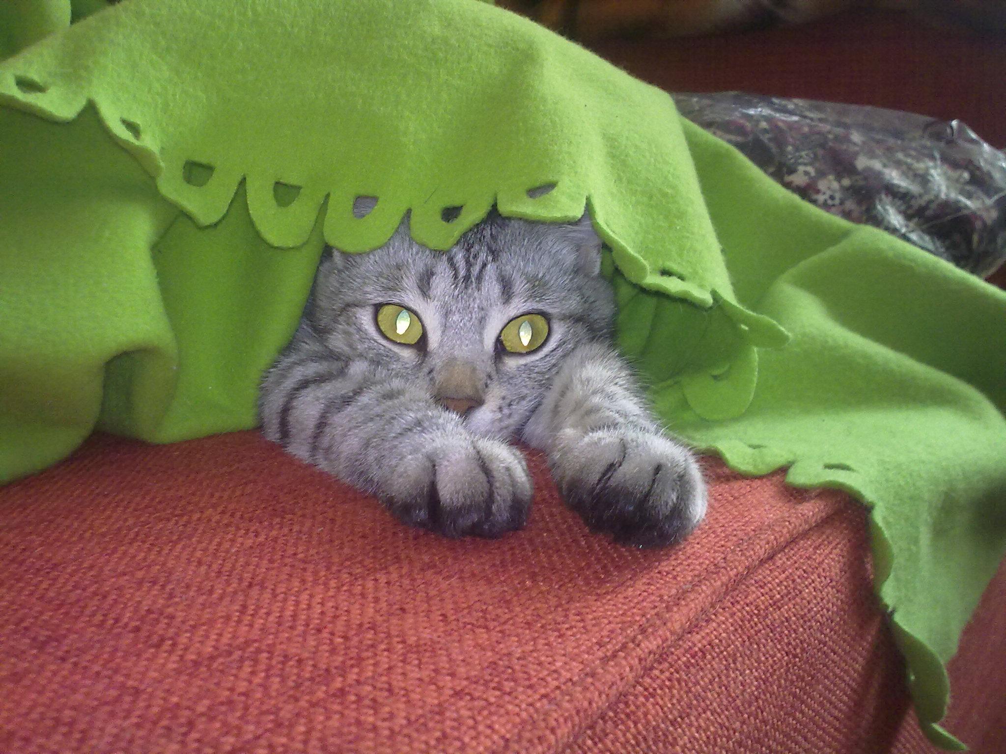 Кася. Лучше кошки зверя нет!