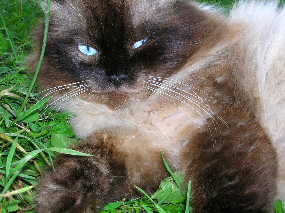 Тимка. Лучше кошки зверя нет!