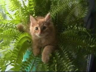 любимое место отдыха. Лучше кошки зверя нет!