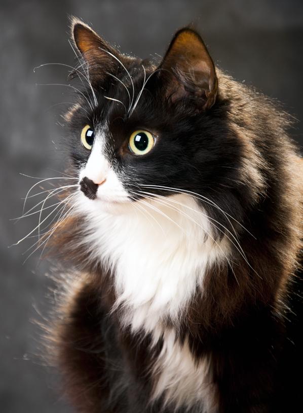 Лучше кошки может быть только... КОТ =). Лучше кошки зверя нет!