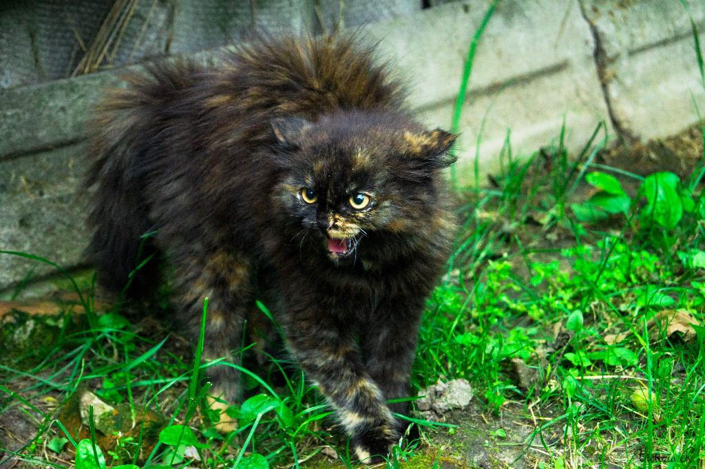 ты не смотри что я маленькая... Лучше кошки зверя нет!