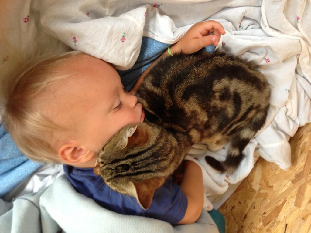 Добрынюшка и его кот-баюн. Братья наши меньшие