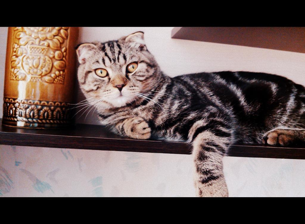 Вольдемар. Лучше кошки зверя нет!