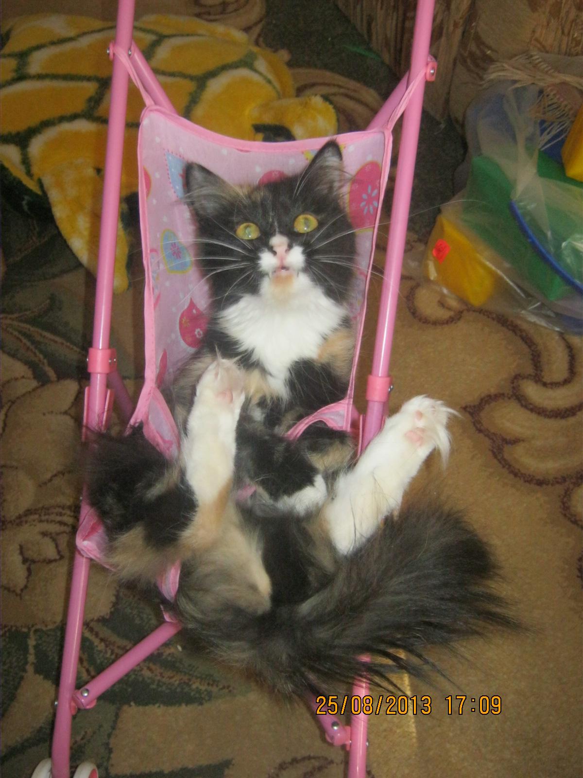 Покатайте меня!!!. Лучше кошки зверя нет!