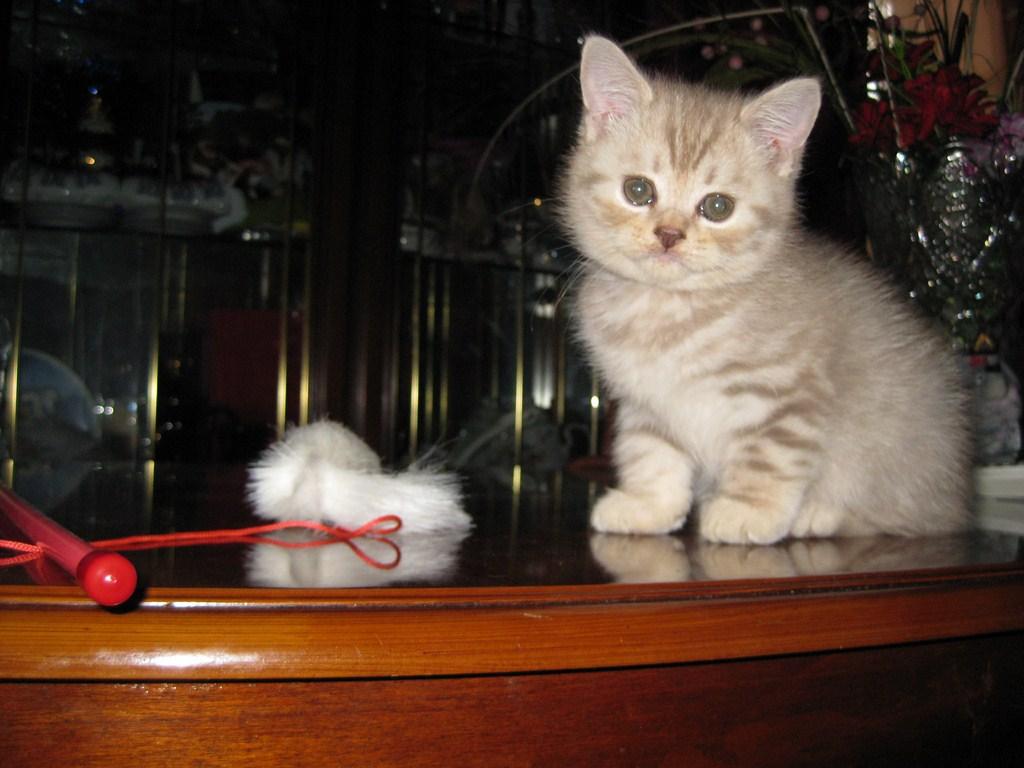 Чудо.1й день дома.. Лучше кошки зверя нет!