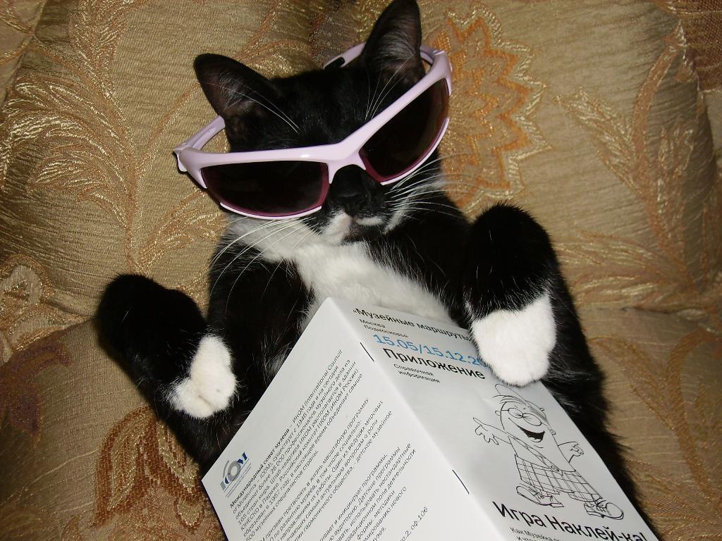 Я устал и отдыхаю.... Лучше кошки зверя нет!
