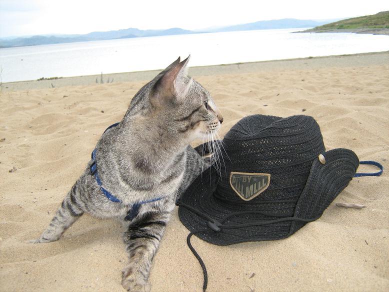 кот и море. Лучше кошки зверя нет!