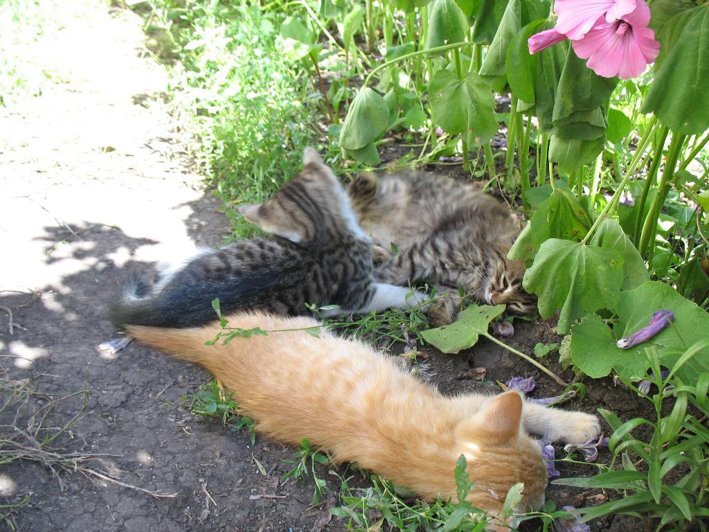 Отдыхаем в тенечке). Лучше кошки зверя нет!