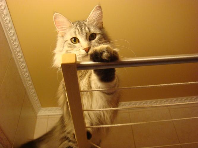 мне сверху видно все.... Лучше кошки зверя нет!