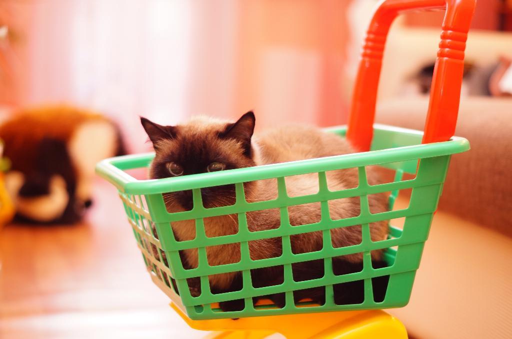 Кот Гвоздик и его кошаковские будни))). Лучше кошки зверя нет!