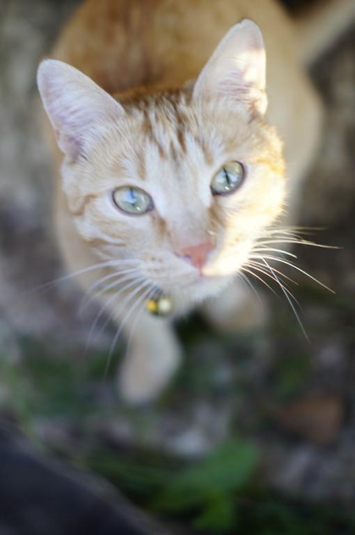 Всем мяу-привет =) Меня зовут Бонифаций (Боня). Лучше кошки зверя нет!