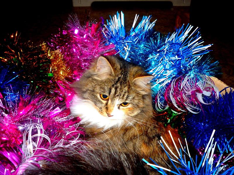 Год кота - каждый год. Лучше кошки зверя нет!