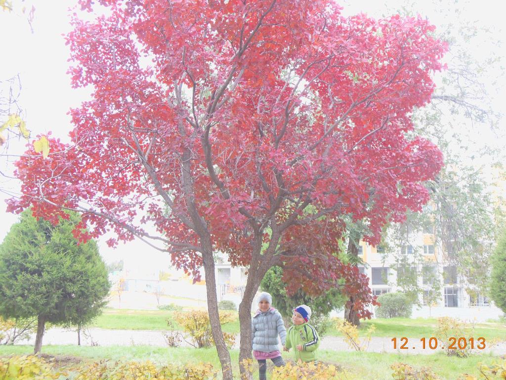 Осень. Отдых на природе