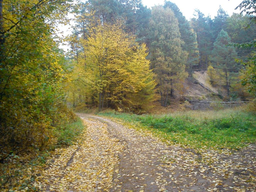 дорога в лесу. Лесной пейзаж