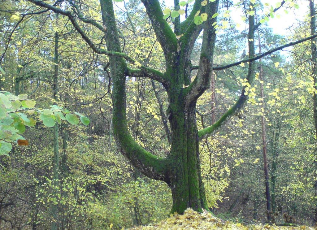 осень в лесу. Лесной пейзаж